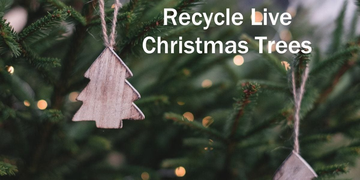 Ankeny Christmas Tree Pickup 2021 City To Assist Residents In Recycling Live Christmas Trees Discover Muscatine
